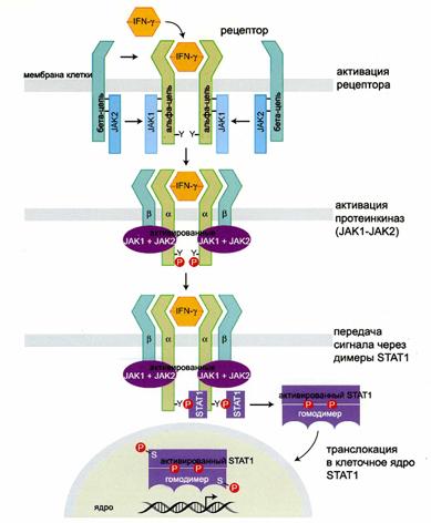 Прививки от гепатита казахстан